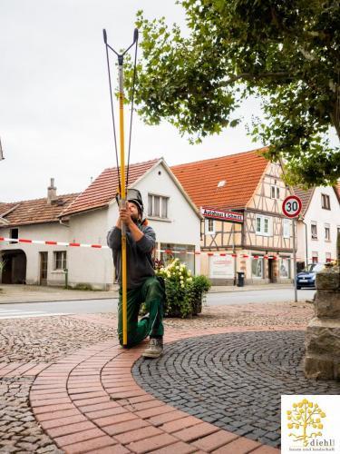 Projekt-15-Baumpflege-Bismarkplatz-1