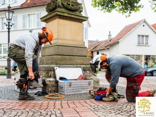 Projekt-15-Baumpflege-Bismarkplatz-2