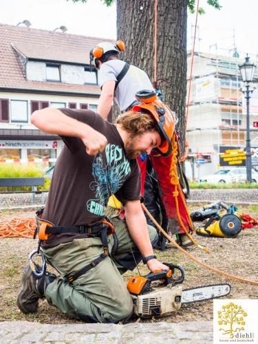 Projekt-15-Baumpflege-Bismarkplatz-3