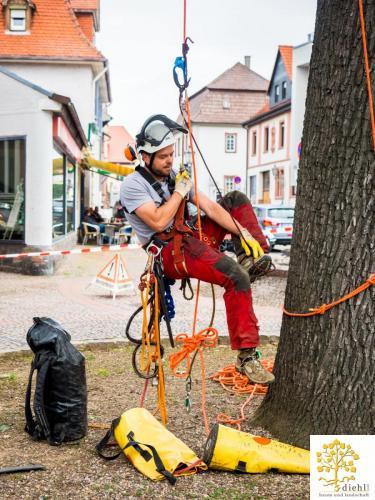 Projekt-15-Baumpflege-Bismarkplatz-4