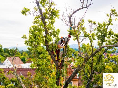 Projekt-15: Baumpflege