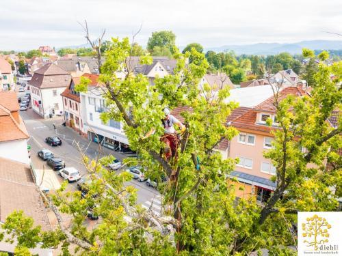 Projekt-15-Baumpflege-Bismarkplatz-7
