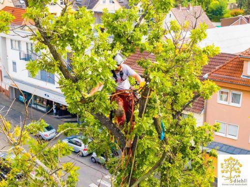 Projekt-15-Baumpflege-Bismarkplatz-8