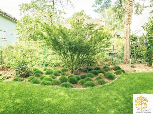 Projekt-19: Gartenbau