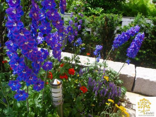 Projekt-4: Gartenbau